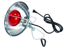 Little Giant® Brooder Reflector Lamp - Coastal Ag Supply