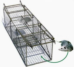 Pied Piper Double Door Animal Trap - Coastal Ag Supply