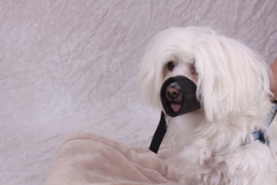 Nylon Pet Muzzles MZ